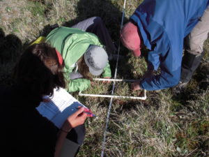 Identifying plants on the tundra